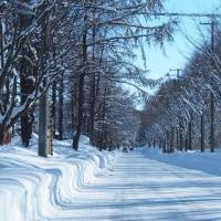 厳しい寒さの中の野幌森林公園