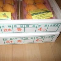 須崎市より、ビワ8パック届きました!