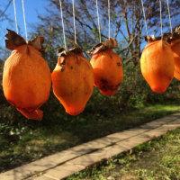 小春日和の吊るし柿