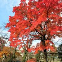 御殿山の紅葉