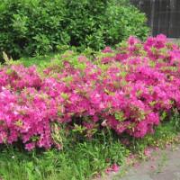 花盛りの季節