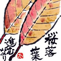 落ち葉がきれい