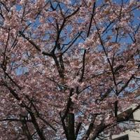 2017年3月17日(金)新川の散歩で春の行方を見届けに