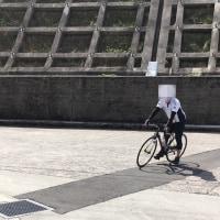 お花見サイクリング