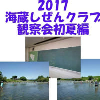 海蔵しぜんクラブ 2017海蔵川生き物調査初夏編