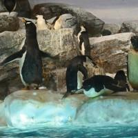 名古屋港水族館 (ペンギン舎) 17