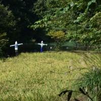 四季折々747  秋の長池公園3
