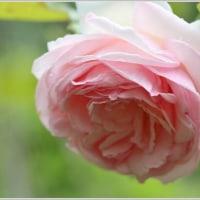 初夏の庭にて、、、