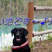 「 車内 」の陸くん~♪(北海道編)