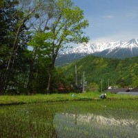 17年5/29~今日の御嶽山~山野草