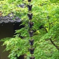 京都観光(永観堂と哲学の道)