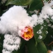 蓮華寺の雪