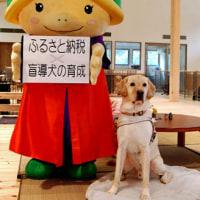 ふるさと納税、返礼に「盲導犬の育成」追加 京都・亀岡市