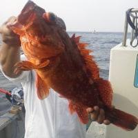 今日の釣果…