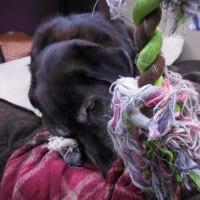 所詮ロープは繊維の塊ということ