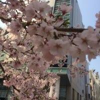 春が来ていた🌸