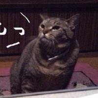 猫が増えていく家には理由があった