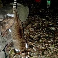 庭猫 361