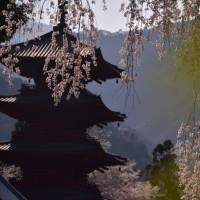 幻の五重塔と桜