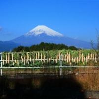 富士山と大根