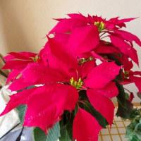 年末到来の花々