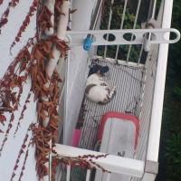 吾輩は昼寝中。のんきなネコ