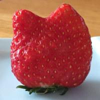 ねこのおくさん用のイチゴだわ!!