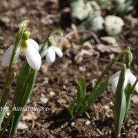 春かしら~~