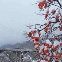 11月24日 思わぬ大雪