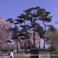 JGSDF宇都宮駐屯地 創立67周年記念行事(1)