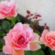 カルマ解消㉜のお花を流しました。
