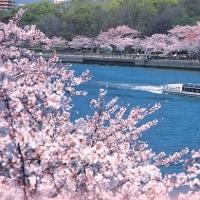 3/31、4/2、4/4、4/6、4/9【大阪】大川沿いに位置する帝国ホテルにて西洋料理のお食事と大川桜