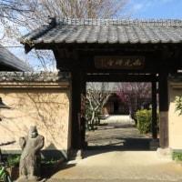 埼玉県坂戸市の西光寺へ梅を見に行きました 2017年2月25日