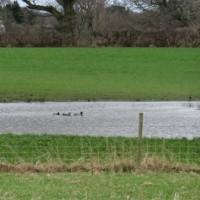 住宅街の中の農地に突然現れた池、冬の嵐の置き土産