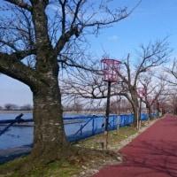 瓢湖、歩道が舗装