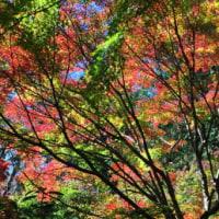 覚園寺の紅葉と雪