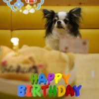 ラムネちゃん、7歳のお誕生日おめでとう♪