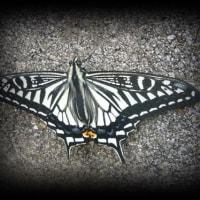 可哀そうな蝶
