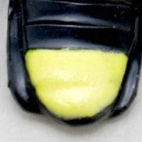ゲンジボタル No.279