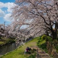 DSC-RX100M3で撮った桜