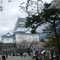 小田原城址の桜  2017