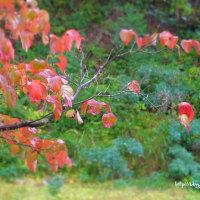 小さな秋の庭