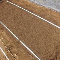 タマネギの苗床をつくりました