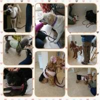 4月21日(金)…美香さんの犬クラス