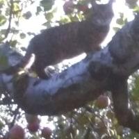 岩合光昭の猫識