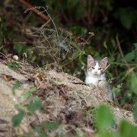 比治山の猫224