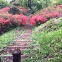 伊香保・長嶺展望台からの躑躅  5/14誕生花・アスチルベ