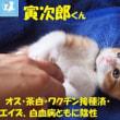 新しい保護猫ちゃんご紹介&里親さま募集でぇーーーすっ