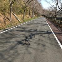 愛犬とお散歩!
