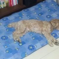 睡眠のスタイル